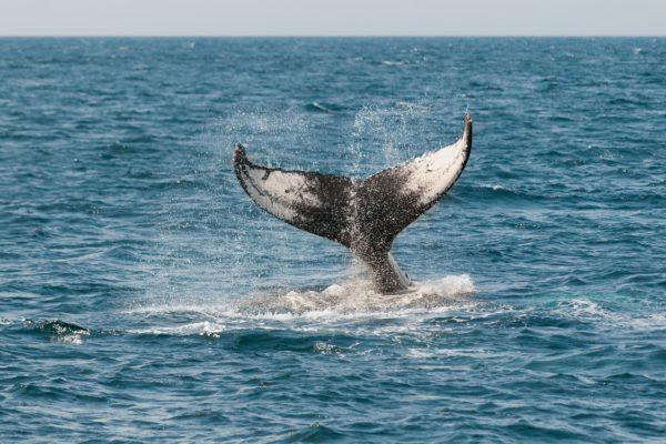 whale-watching-san-ramo